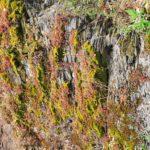 Felsenwelt Erden an der Mosel