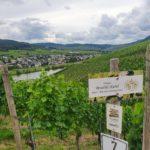 Weinberge des Weinguts kiebel.